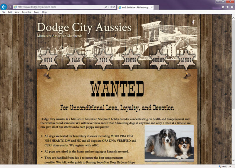 Dodge City Aussies